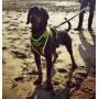 profesjonalne szelki dla psa Niggeloh z uchwytem Sport Plus szelki dla psa myśliwskiego