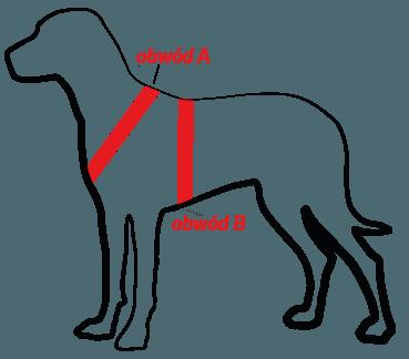 jak zmierzyć psa do szelek